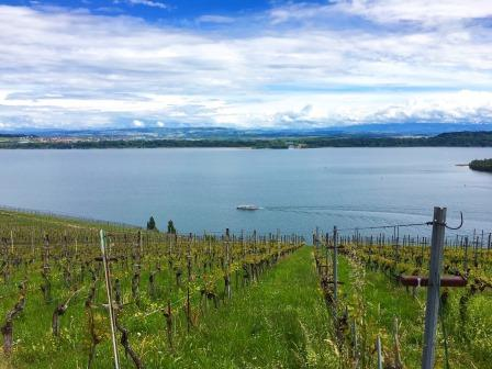 Shores of the Bielersee - Vineyards of Ligerz