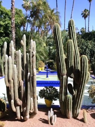 Cactus dans le Jardin Majorelle à Marrakech