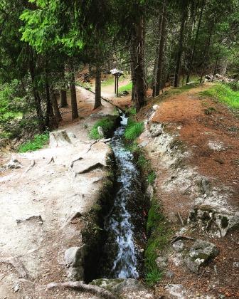 Bisse de Tsa-Crêta coulant dans la forêt