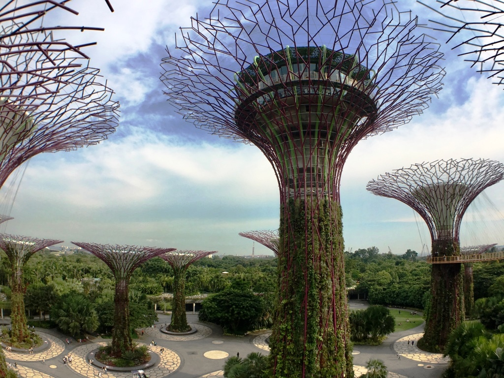 View of the super trees in Singapore's Gardens by the Bay