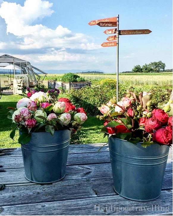 Photo de roses rouges et roses regroupé en deux bouquets de fleurs, de taille moyenne dans deux sots en fer.