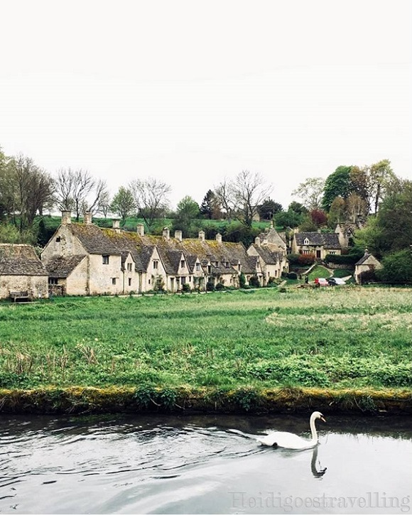 View of typical British cottages lined up in front of green meadow and river with a swan swimming on the river