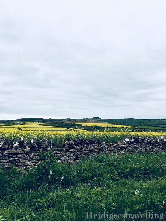 Picture of field of yellow flowers, small stone wall and lush grass
