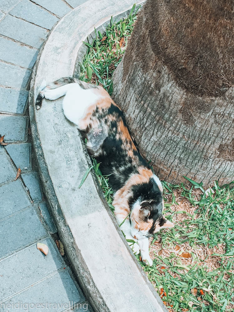 Close-up picture of a white-ginger-black coloured cat lying on the grass next to a tree