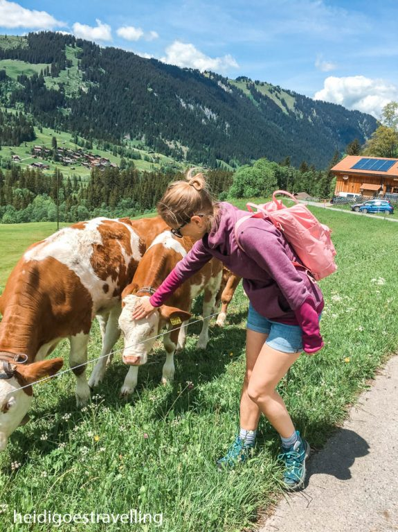 Young blond woman petting two white/caramel coloured cows standing in a lush green mountain field