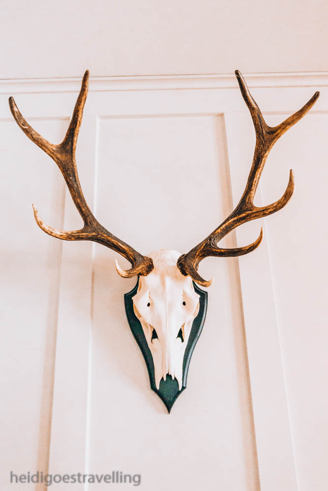 Picture of a wild game skull hanging on a wall